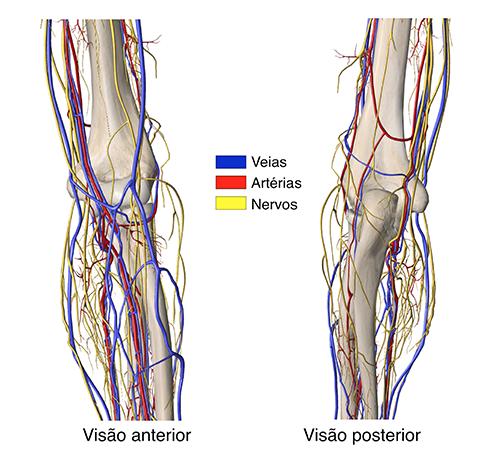 Visão posterior e anterior - Ombro
