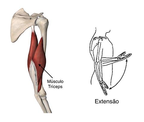 Músculos do Ombro 2